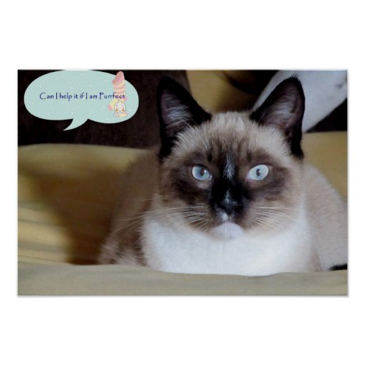 Adorable Snowshoe Kitten I am purrfect poster