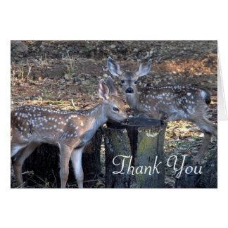 Adorable Spotted Fawns Thank You Note Card
