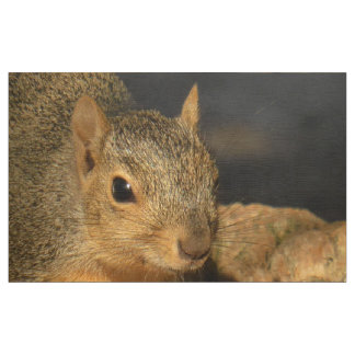 Adorable Squirrel Fabric