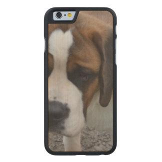 Adorable St Bernard Carved® Maple iPhone 6 Slim Case