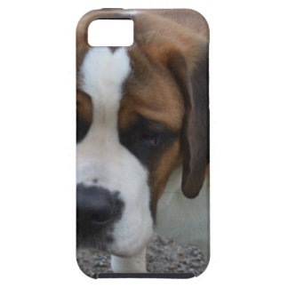 Adorable St Bernard Case For The iPhone 5