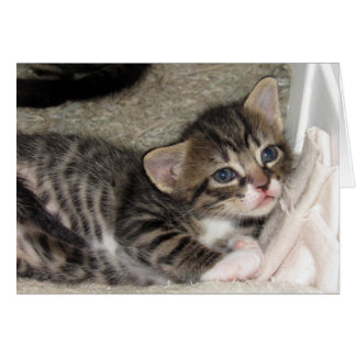 Adorable Tabby Greeting Card