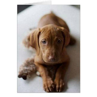 Adorable Vizsla Puppy Dog Birthday Card