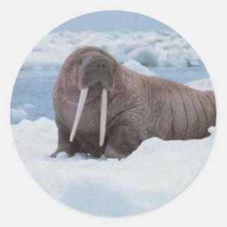 Adorable Walrus Classic Round Sticker