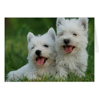 Adorable Westie Puppies Card