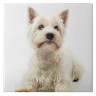 Adorable White West Highland Terrier Ceramic Tile