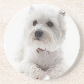 Adorable White West Highland Terrier Coaster