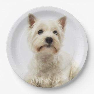 Adorable White West Highland Terrier Paper Plate