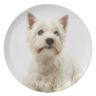 Adorable White West Highland Terrier Plate