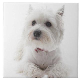 Adorable White West Highland Terrier Tile