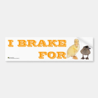 Adorable Yellow and Gray Ducklings Photograph Bumper Sticker
