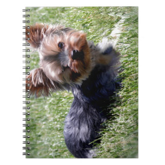 Adorable Yorkie Multiple Products Selected Notebooks