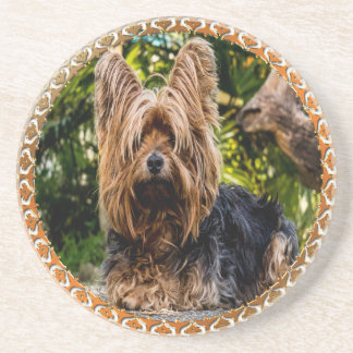 Adorable Yorkshire brown and black terrier Coaster
