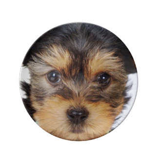 Adorable Yorkshire Terrier Plate