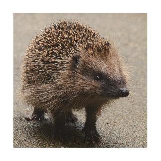 Adorable young hedgehog wood print