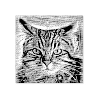 Adrift in Colors Abstract Revolution Cat Rubber Stamp