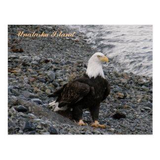 Adult Bald Eagle on the Beach, Unalaska Island Postcard