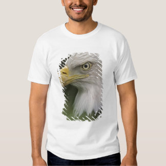 Adult Bald Eagle Portrait, Haliaeetus T-shirt