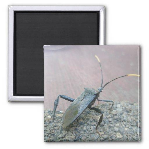 Adult Black Assasin Bug (Reduviid) Items Magnets