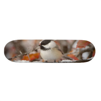 Adult Black-capped Chickadee in Snow, Grand Custom Skate Board