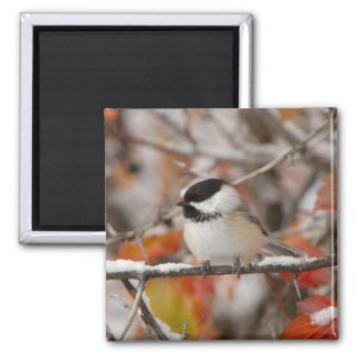 Adult Black-capped Chickadee in Snow, Grand Square Magnet