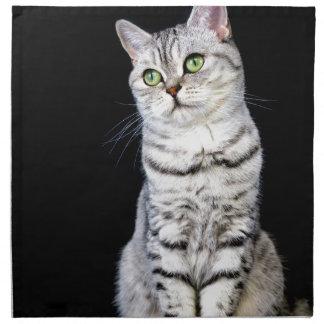 Adult british short hair cat on black background napkins
