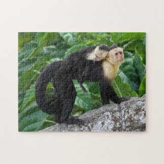 Adult Capuchin Monkey Carrying Baby On Its Back Puzzles