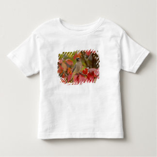 Adult Cedar Waxwing on hawthorn with snow, 2 T-shirt