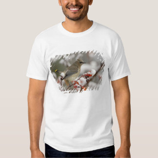 Adult Cedar Waxwing on hawthorn with snow, 3 T-shirt