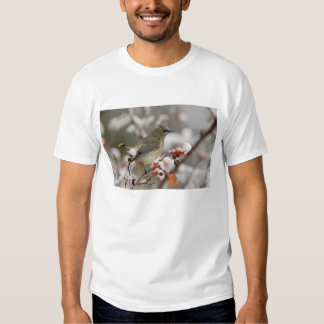 Adult Cedar Waxwing on hawthorn with snow, 3 Tee Shirts