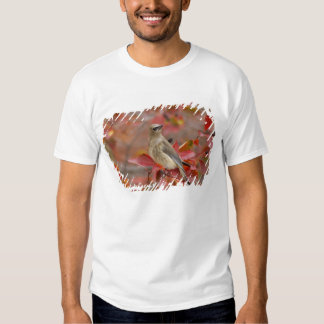 Adult Cedar Waxwing on hawthorn with snow, 4 T Shirt