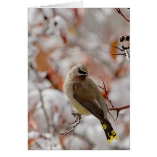 Adult Cedar Waxwing on hawthorn with snow, Card