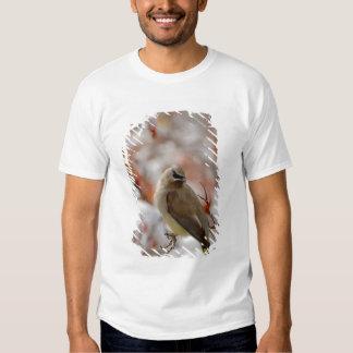Adult Cedar Waxwing on hawthorn with snow, Shirt