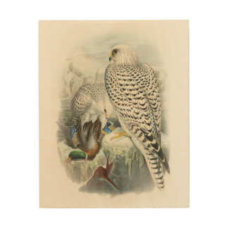 Adult Dark Greenland Falcon Birds of Great Britain Wood Prints