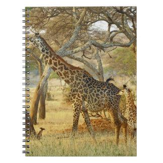 Adult female and juvenile Giraffe, Giraffa Notebook