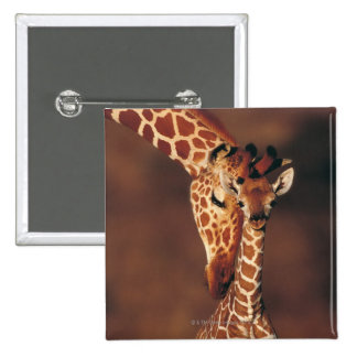 Adult Giraffe with calf (Giraffa camelopardalis) 15 Cm Square Badge