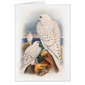 Adult Light Greenland Falcon Birds Great Britain Card