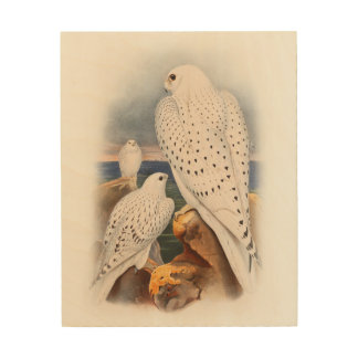 Adult Light Greenland Falcon Birds Great Britain Wood Print