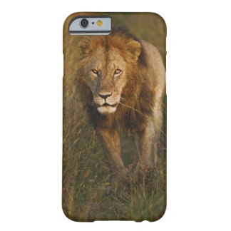 Adult male lion walking through tire tracks, barely there iPhone 6 case