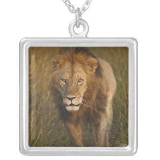 Adult male lion walking through tire tracks, square pendant necklace