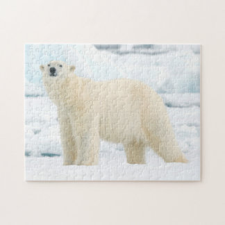 Adult polar bear in search of food jigsaw puzzle