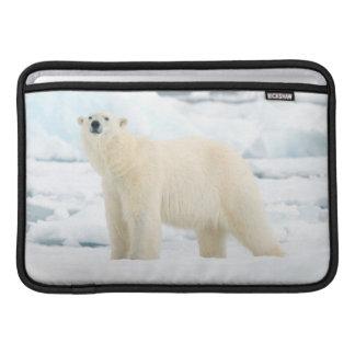Adult polar bear in search of food MacBook air sleeves
