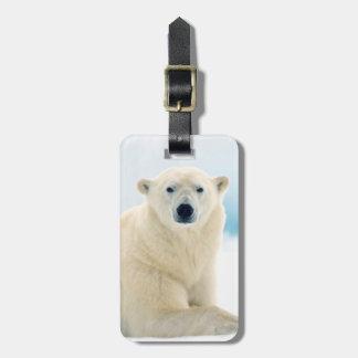 Adult polar bear large boar on the summer ice luggage tag