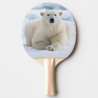 Adult polar bear on the summer pack ice ping pong paddle