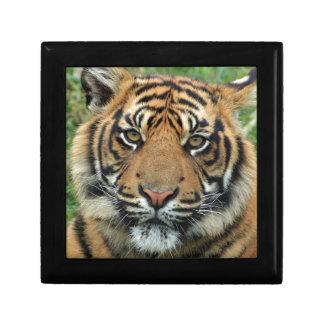 Adult Tiger Gift Box