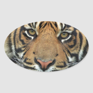 Adult Tiger Oval Sticker