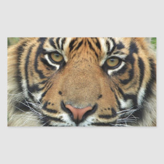 Adult Tiger Rectangular Sticker
