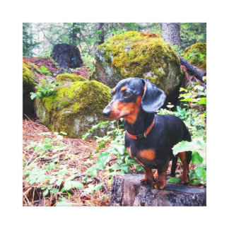 Adventure Dog Canvas Print