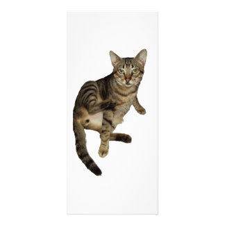 Advertising card Charming Cat Personalized Rack Card