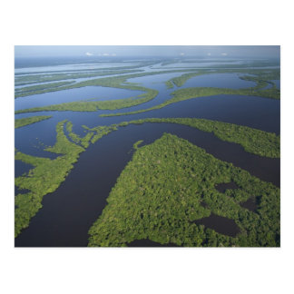 Aerial of Anavilhanas Archipelago, Flooded Postcard